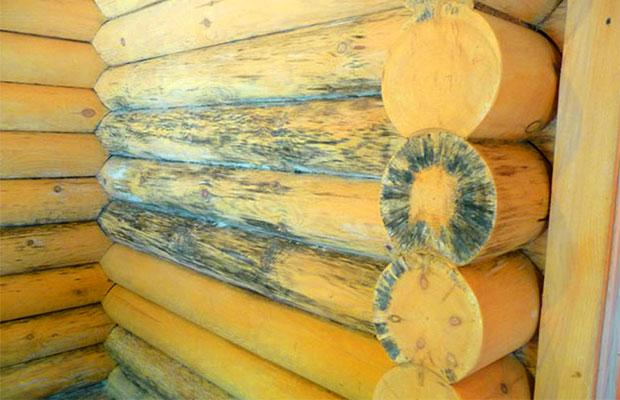 На древесину пагубно влияет грибок