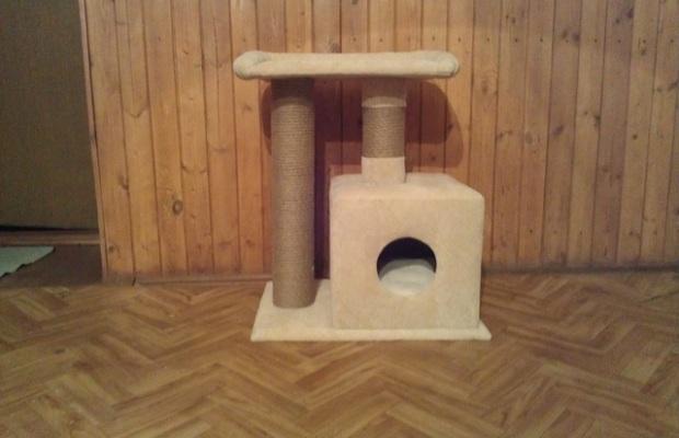 Домик для кота обязательно нужно оборудовать когтеточками