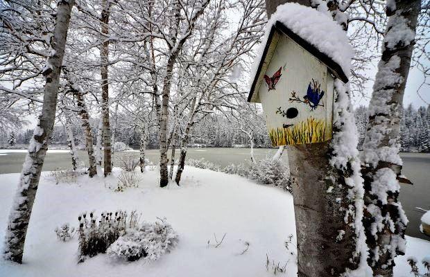 Вешать скворечник лучше всего зимой