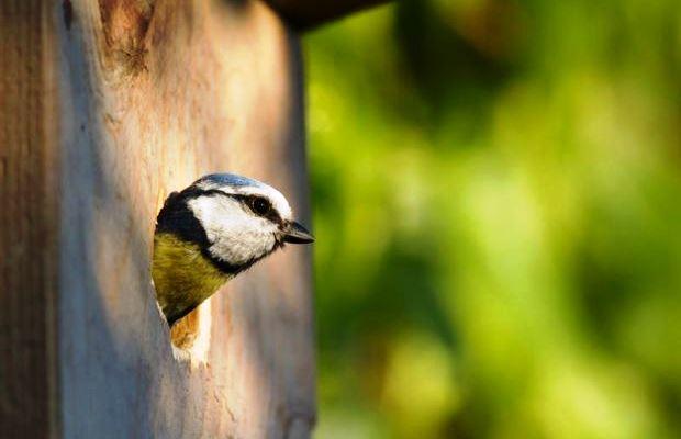 Когда думаете, как бы сделать скворечник покрасивее, не забывайте, что птичкам в нем потом ещё растить потомство