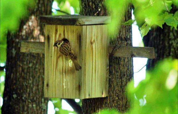 При изготовлении скворечника, рассчитывайте на предпочтения птиц - нужно угодить пернатым, чтобы они отказались от естественного жилища