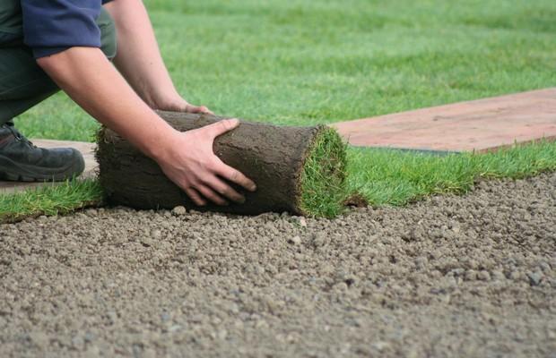 Озеленение рулонным и посевным газоном
