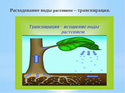 Как навсегда забыть о чистке выгребной ямы с помощью «деревьев-насосов»?